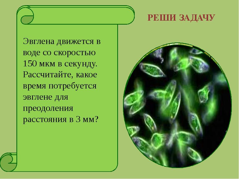 РЕШИ ЗАДАЧУ Подсчитайте длительность сохранения жизнеспособности пыльцевых зе...