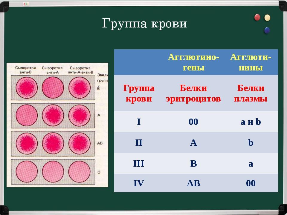 Группа крови  Агглютино- гены Агглюти- нины Группа крови Белки эритроцитов Б...