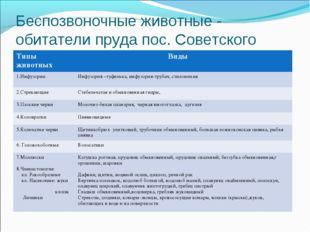 Беспозвоночные животные - обитатели пруда пос. Советского Типы животных Виды