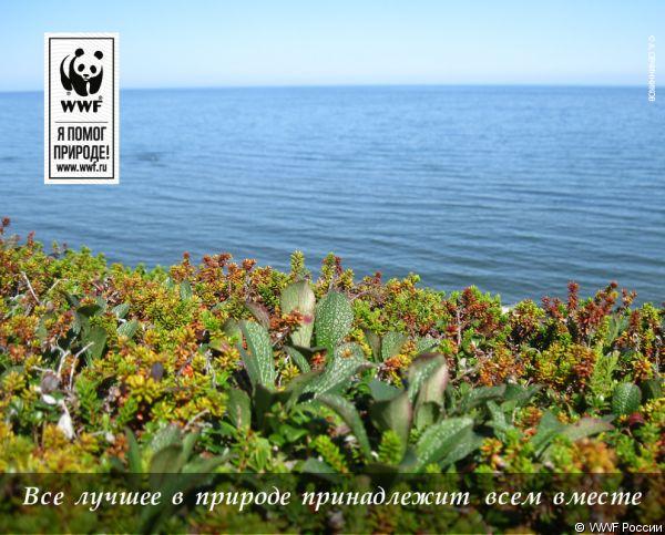 http://wwf.ru/pic/membership/mailer/lsimacheva/seawwf-1.big.jpg