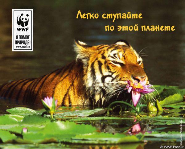 http://wwf.ru/pic/membership/mailer/lsimacheva/tigrwwf-2_1.big.jpg