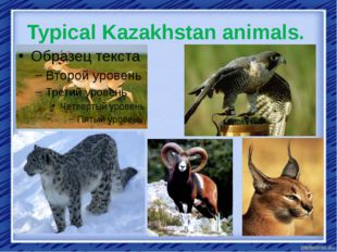 Typical Kazakhstan animals.