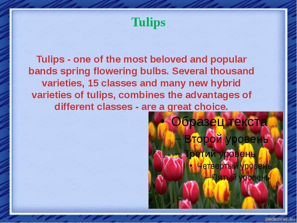 Tulips Tulips - one of the most beloved and popular bands spring flowering bu...