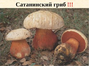 Сатанинский гриб !!!