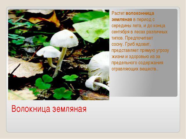 Волокница земляная Растетволоконница землянаяв период с середины лета, и до...