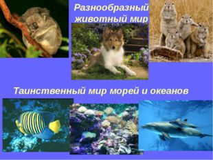 Разнообразный животный мир Таинственный мир морей и океанов