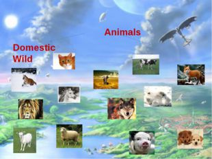 Animals Domestic Wild