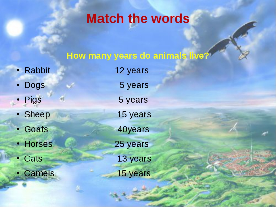 Match the words How many years do animals live? Rabbit 12 years Dogs 5 years...