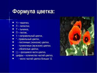 Формула цветка: Ч – чашечка, Л – лепестки, Т – тычинка, П – пестик, 1 – непра