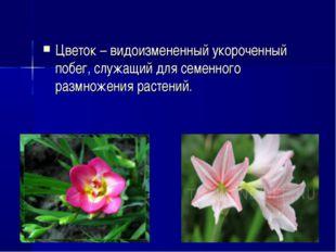 Цветок– видоизмененный укороченный побег, служащий для семенного размножения