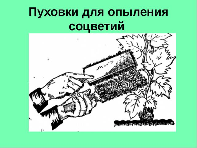 Пуховки для опыления соцветий