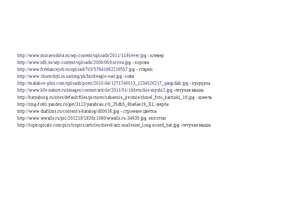 http://www.muravushka.ru/wp-content/uploads/2011/11/klever.jpg - клевер http:...