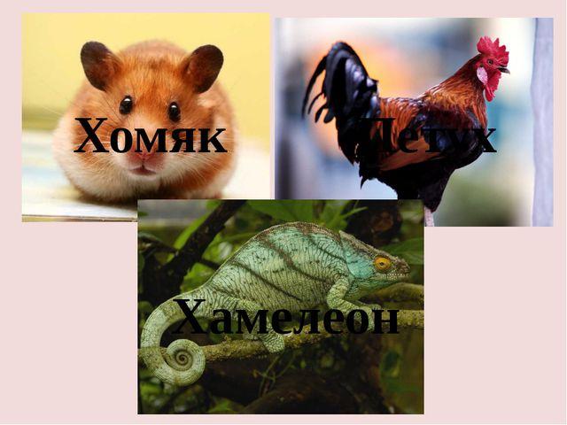 Хомяк Петух Хамелеон