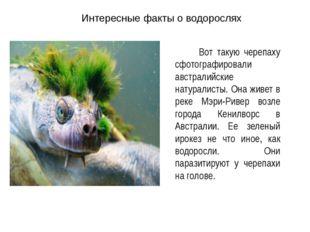 Интересные факты о водорослях Вот такую черепаху сфотографировали австралийск