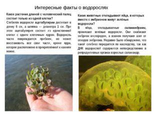 Интересные факты о водорослях Какое растение длиной с человеческий палец сост