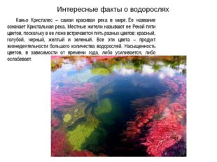 Интересные факты о водорослях Каньо Кристалес – самая красивая река в мире.Е