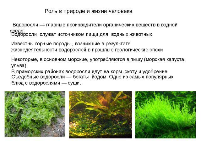 Роль в природе и жизни человека Водоросли— главные производители органически...