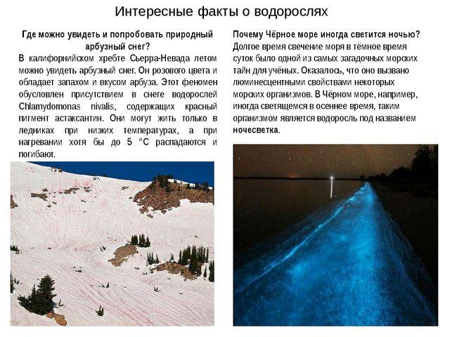 Где можно увидеть и попробовать природный арбузный снег? В калифорнийском хре...