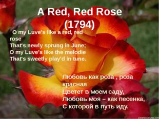 A Red, Red Rose (1794) O my Luve's like a red, red rose That's newly sprung