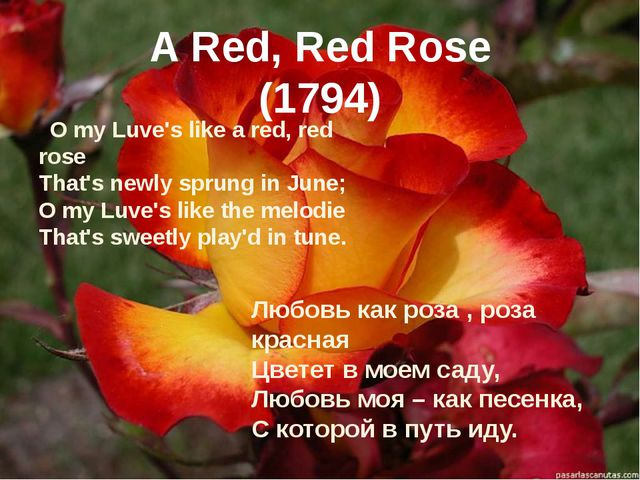 A Red, Red Rose (1794) O my Luve's like a red, red rose That's newly sprung...