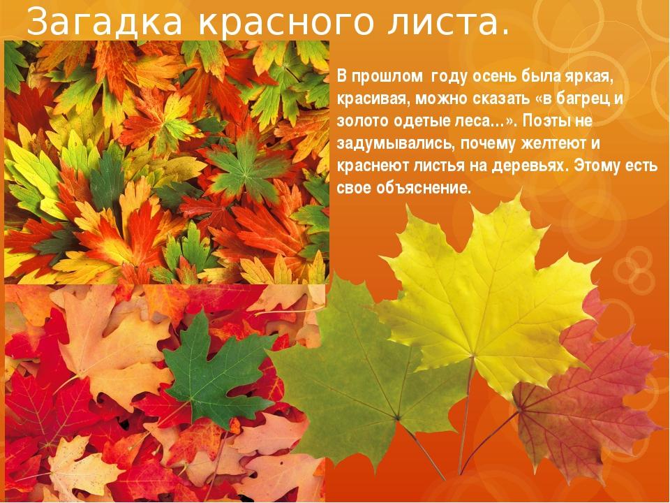 Загадка красного листа. В прошлом году осень была яркая, красивая, можно сказ...