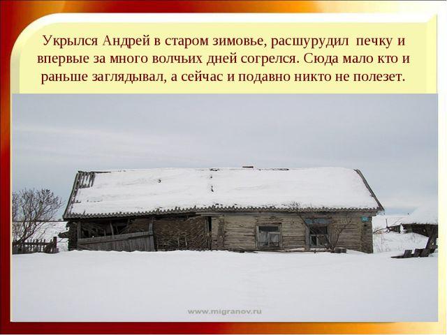 Укрылся Андрей в старом зимовье, расшурудил печку и впервые за много волчьих...
