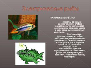 Электрические рыбы известны со времен Древнего Египта. Слабые разряды обычно