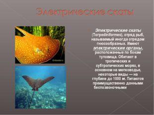 Электрические скаты (Тогреdiniformes), отряд рыб, называемый иногда отрядом г