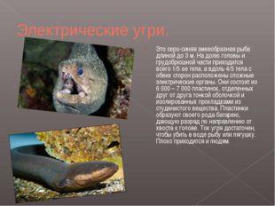 Электрические угри. Это серо-синяя змееобразная рыба длиной до 3м. На долю г