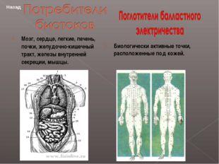 Мозг, сердце, легкие, печень, почки, желудочно-кишечный тракт, железы внутре