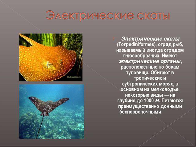Электрические скаты (Тогреdiniformes), отряд рыб, называемый иногда отрядом г...