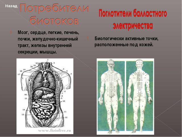 Мозг, сердце, легкие, печень, почки, желудочно-кишечный тракт, железы внутре...