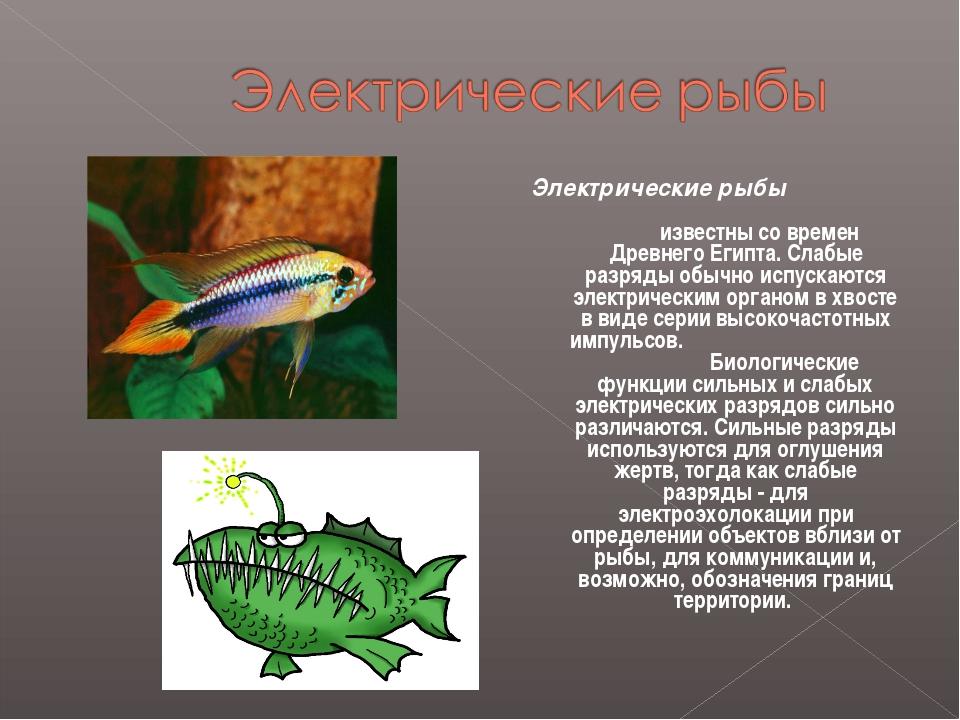 Электрические рыбы известны со времен Древнего Египта. Слабые разряды обычно...