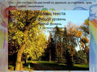 Лес – это сообщество растений из деревьев, кустарников, трав, мхов, грибов, л
