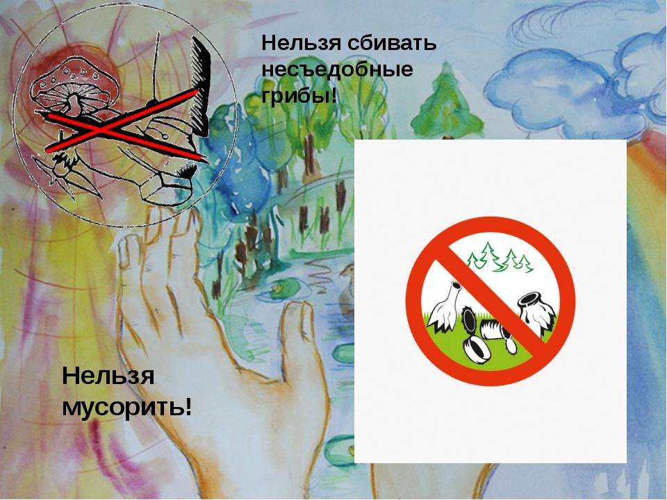 Нельзя сбивать несъедобные грибы! Нельзя мусорить!