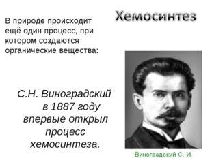 С.Н. Виноградский в 1887 году впервые открыл процесс хемосинтеза. В природе п