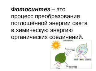 Фотосинтез– это процесс преобразования поглощённой энергии света в химическу