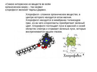 «Самое интересное из веществ во всём органическом мире» - так назвал хлорофил