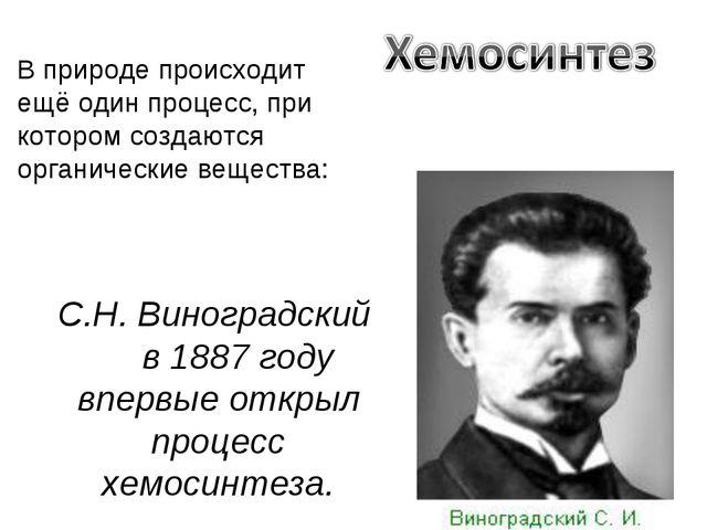 С.Н. Виноградский в 1887 году впервые открыл процесс хемосинтеза. В природе п...