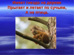 Имеет гнездо на дереве Прыгает и летает по сучьям, А не птица.