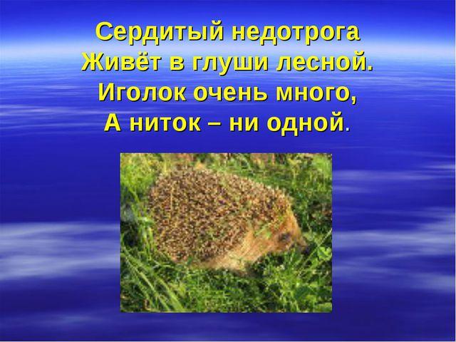 Сердитый недотрога Живёт в глуши лесной. Иголок очень много, А ниток – ни од...