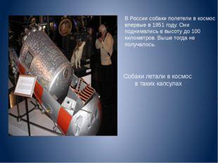 В России собаки полетели в космос впервые в 1951 году. Они поднимались в выс