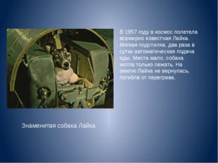 В 1957 году в космос полетела всемирно известная Лайка. Мягкая подстилка, два