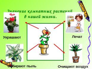 Значение комнатных растений в нашей жизни. Лечат Очищают воздух Украшают Соби