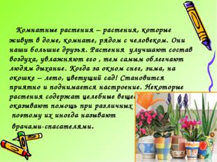 Комнатные растения – растения, которые живут в доме, комнате, рядом с челове