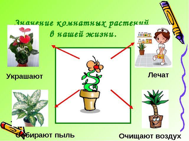 Значение комнатных растений в нашей жизни. Лечат Очищают воздух Украшают Соби...