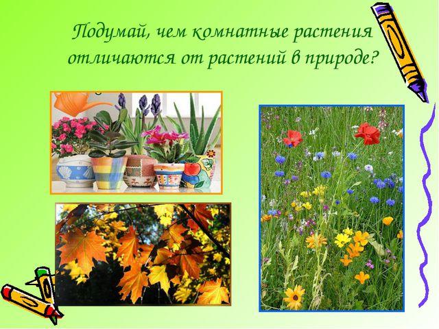 Подумай, чем комнатные растения отличаются от растений в природе?