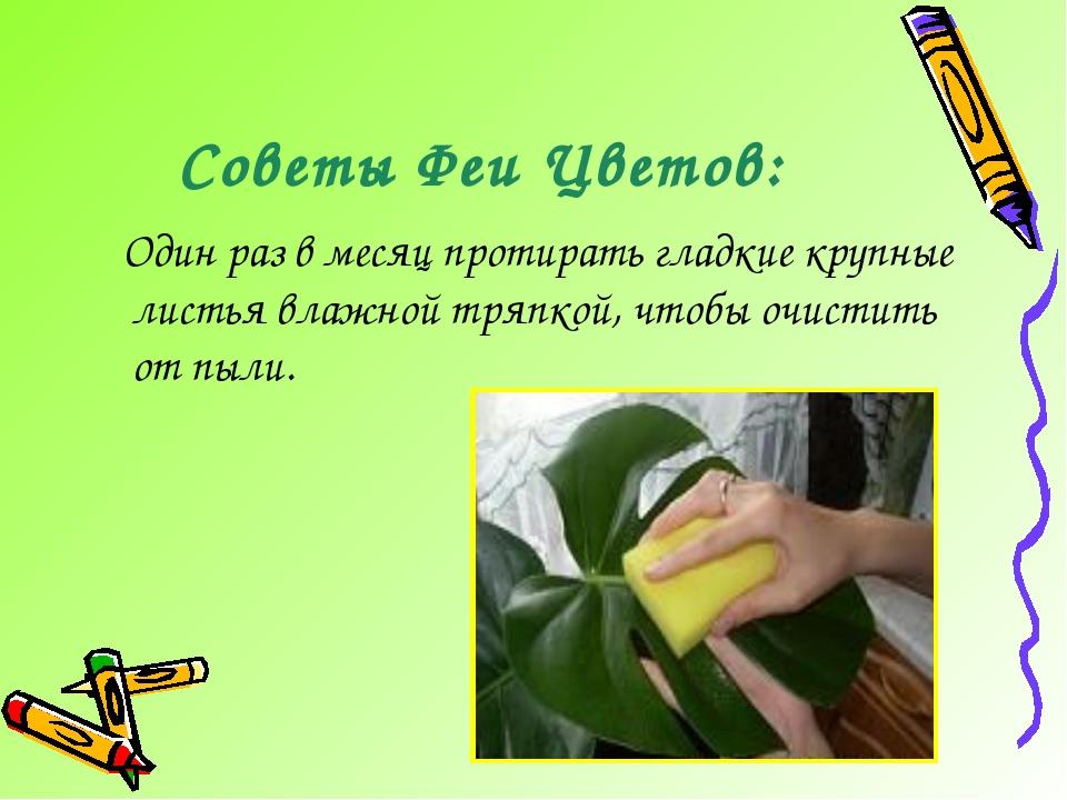 Советы Феи Цветов: Один раз в месяц протирать гладкие крупные листья влажной...