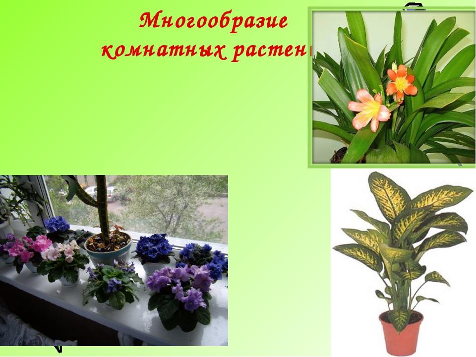 Многообразие комнатных растений