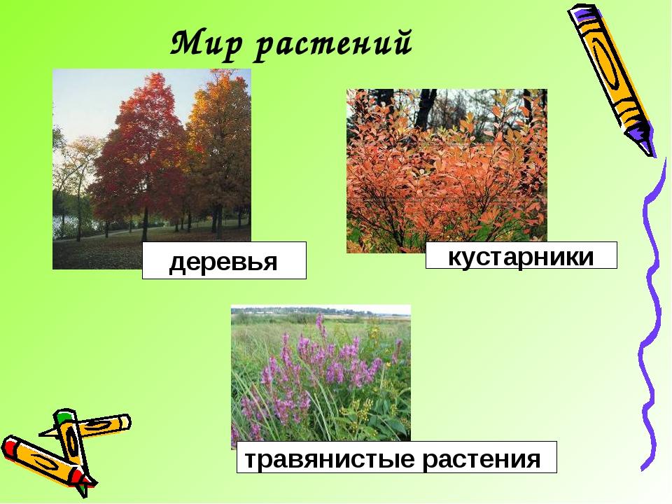 Мир растений кустарники деревья травянистые растения